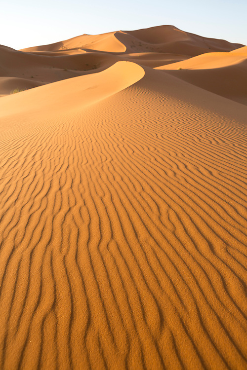 """Textures, shapes and footprints in the wild Saharan sand dunes near Merzouga, Erg Chebbi region of the Moroccan Sahara desert, Southern Morocco, 2015-06-10.<br /><br />The Moroccan Sahara desert is divided into two main regions; Erg (""""dune"""") Chebbi and Erg Chigaga. <br /><br />The Erg Chebbi region is more easily accessed from both Fez and Marrakesh, with well built asphalt roads taking you right upto the face of the dunes. It sees increased tourism as a result. A short walk from the historic trans-Saharan caravan-route town of Merzouga, and you'll find yourself immersed by the Chebbi dunes. The drive alongside towering walls of sand dunes as you approach in itself is a spectacle. The Chebbi region has the tallest dunes in Morocco, which is another reason as to why its the most popular choice, and its views of mountains in Algeria in the distance is not to be missed. <br /><br />Whether bound for the """"chebbi"""" or the """"chigaga"""" dunes, your journey from the Imperial cities of Fez or Marrakech will take you through significant changes in landscape, from barren rocky plateaus to lush Oasis valleys, before reaching the desert itself."""