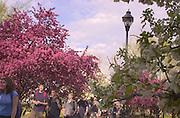 16403Spring Campus Shots : 4/19/04