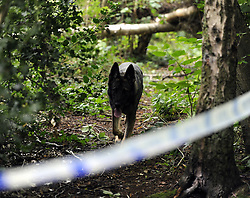 © Licensed to London News Pictures. 08/08/2012 . Police search teams today (08.08.2012) time 2pm. Local woodland called Birchwoods is being search by police teams and police dogs In the hunt for missing 12 year old Tia Sharp..12 years old Tia Sharp has been missing from the Lindens on The Fieldway Estate in New Addington,Croydon,Surrey since Friday last week. .Photo credit : Grant Falvey/LNP