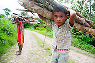 Poverty in West Timor, Indonesia has led to chronic malnutrition.  Boys haul firewood to their home.