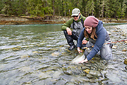 Andrea Charleton releases a fresh winter steelhead, with help from Rob Williamson. Cowichan River, Vancouver Island, BC