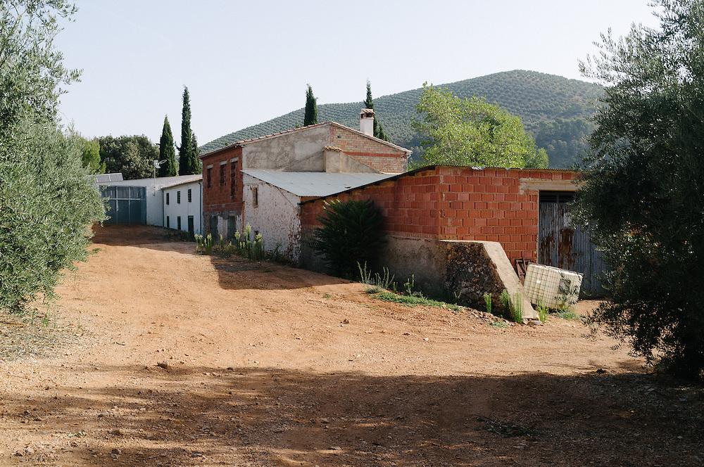 Olive farm in Jaen, Spain