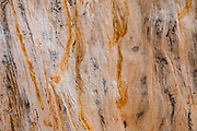 """Tree wood pattern. Hike to Photographer's Point, Wind River Range, Bridger-Teton National Forest, Rocky Mountains, Wyoming, USA. The Continental Divide follows the crest of the """"Winds""""."""