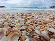 Seashells on the Mediterranean shore