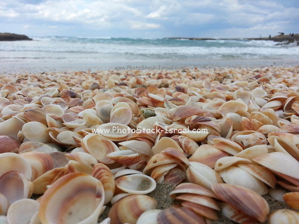 Seashells on the Mediterranean shore