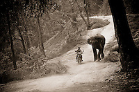 A man rides his scooter alongside an elephant outside of Chiang Mai, Thailand, Southeast Asia.