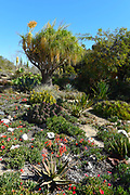 A Cactus and Succulent Garden