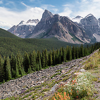 View of mountains and wildflowers from Moraine Lake Road, Banff National park, Alberta, Canada.