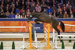 032 - Galdo<br /> KWPN Stallion Selection - 's Hertogenbosch 2014<br /> © Dirk Caremans