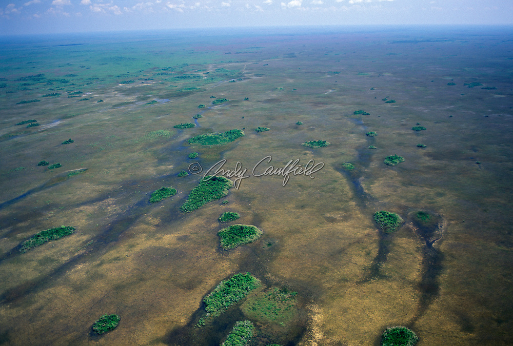 Hammocks aerial in Shark River Slough, Everglades NP, Florida  USA