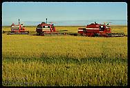 Row of combines dances a ballet in late pm on Granja Bretanhas, huge rice farm;Rio Grande do Sul Brazil