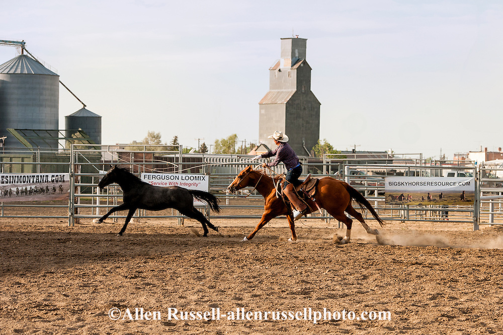 Will James Roundup, Ranch Rodeo, Wild Horse Roping, KC Verhelst, Hardin, Montana, MODEL RELEASED, PROPERTY RELEASED rider & horse only.