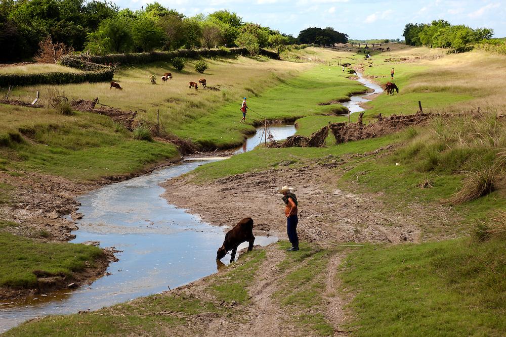 A stream in the Cauto Cristo area of Granma Province, Cuba. Livestock are grazing and a farmer watches his cow drink.