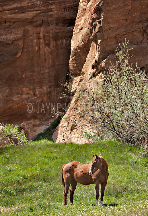 A rescue horse enjoys life in Angel Canyon, Utah.