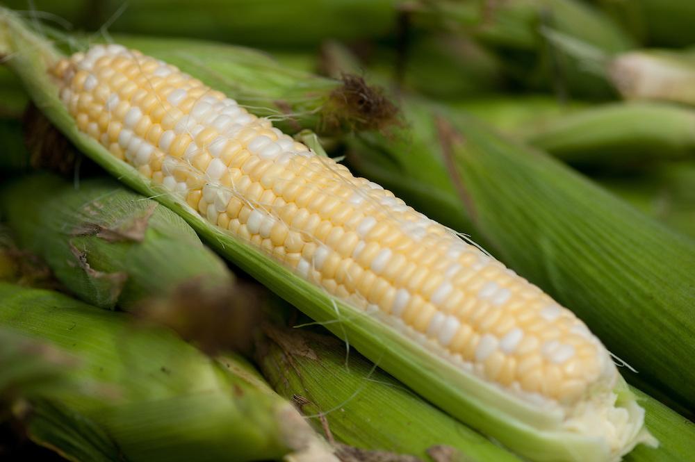 Sweet corn, corn