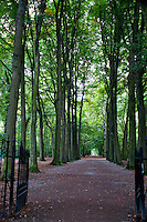 Alley of summer trees in a park in Antwerp, Belgium