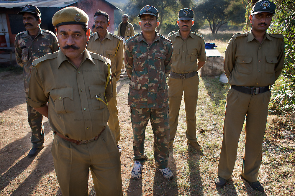 Forest guards gather on the morning of a second failed attempt at tiger relocation in Rantambore National Park. Though they posses a wealth of knowledge about tigers, the opinion of guards like these is rarely sought in the Forest Department's ridged hierarchy...Sariska National Park in Rajasthan was once home to dozens of tigers but by 2005 poaching had resulted in their complete eradication. Recognising the urgent need for intervention, the Indian and Rajasthan-state governments began the reintroduction of tigers into Sariska. Two cats were airlifted 200 km from Ranthambore National Park in June 2008. On November 5th an attempt to relocate a third tiger was postponed until later in the month. This relocation strategy is certainly an important part of the tiger conservation effort but many, including those like Dharmendra Khandal of the NGO Tiger Watch, argue that it will never be entirely successful without properly confronting the three essential issues that threaten tiger populations: poaching, habitat loss and the hunting of prey-base animals. In turn, these three issues cannot be addressed without acknowledging the malign influence of caste, poverty and poor administrative accountability. Poaching is almost exclusively undertaken by extremely poor and marginalised groups, including the Mogia caste who, without education, land and access to credit have limited alternative means of income. Many in the Mogia community also hunt bush meat for both their own consumption and to sell to others. This results in a depletion of the prey-base upon which tigers feed. Encroachment and grazing by those including the Gujar people who raise dairy herds, have led to habitat loss in Sariska and other parks. To properly tackle the problem of hunting and encroachment, the government must provide alternative livelihoods for marginalised groups and relocate them to viable land before - rather than after - the re-introduction of tigers. Compounding all these issues is the ridged hie