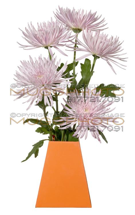 light purple flowers in an orange blumebox