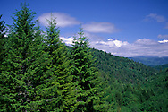 Overlooking forest and hills, Del Norte County, Northern California