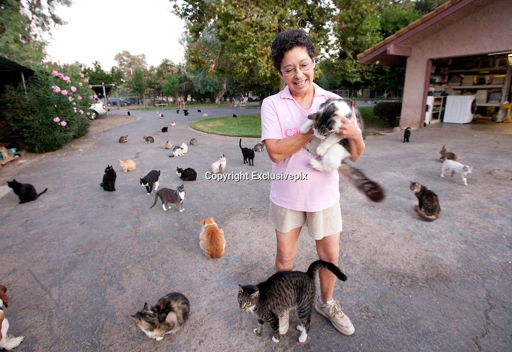 Aug 04, 2011 - Parlier, California, USA - <br /> I'm no crazy cat lady... insists the California animal lover who lives with 700 felines<br /> <br /> Lynea Lattanzio, of Parlier, California, lives with over 700 felines. <br /> But she insists she's no crazy cat lady. <br /> On the contrary, Ms Lattanzio, the star of a new Nat Geo documentary, runs Cat House on the Kings - a '12-acre no-cage, no-kill cat refuge' where she takes in strays, offers low-cost spaying and neutering referrals and facilitates pet adoptions. The show, titled The Lady with 700 Cats, is narrated by Glee actress Jane Lynch as part of the Nat Geo WILD series premiering later this month.<br /> The programme opens with the backstory of The Cat House, founded by Ms Lattanzio just outside of Fresno. <br /> Ms Lattanzio, who said her mother banned her from having a cat as a child, said she began taking rescues after a divorce. <br /> Now, she takes in rescues from all over the world, and estimates she has saved close to 19,000 felines in almost two decades.<br /> <br /> <br /> She said often cats are flown in from New York, after owners decide their apartments are too small for their pets. Sometimes, locals drop unwanted kittens right on her doorstep.<br /> Her sanctuary, which employees 25 workers, is an around-the-clock operation, and the largest of its kind in the world. <br /> A nursery, an intensive care unit and even a retirement home for elderly cats are housed in its walls, where endless meows echo throughout the day.<br /> 'If I were a cat, this is where I'd be. We're a no-cage, no-kill adoption sanctuary,' she explained.<br /> <br /> And as if hundreds of cats were not enough to look after, Ms Lattanzio also has about 15 dogs, which can be seen running around the property in a video trailer. <br /> She says, however, this is just the start.<br /> Ms Lattanzio, who promotes the sanctuary online on Facebook, PetFinder and YouTube.com, expects the series to increase traffic at the refuge. And she has no intention of turning many animals away.<br /> After 19 years working to build the California sanctuary,
