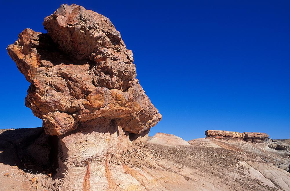 Pedistal logs on Blue Mesa, Petrified Forest National Park, Arizona.