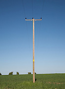 Utility pole / telegraph pole set against a blue sky above a wheat field in early growth stage near Leckhampton Hill in Gloucestershire, England.