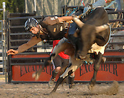 Petoskey's Justin Archy makes an early dismount during the Excalibur Rodeo bull riding competitiion at the 2009 Emmet/Charlevoix County Fair.