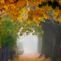 A foggy sidewalk and trees covered with autumn leaves.