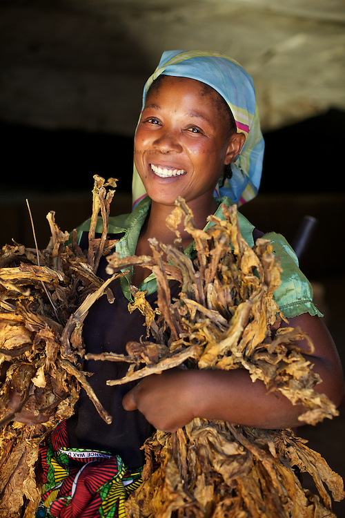 A woman with curred tobacco in a grading unit on the ZRC farm.<br /> <br /> ZRC (Zambezi Ranching &amp; Cropping), a farm 45km from Lusaka. The farm covers an area of 31,000 hectares with 5,000 hectares under cultivation. Ther are 2,500 employees. Crops include soya, wheat, maize, barley and tobacco. Livestock include 11,000 beef cattle as well as chickens.<br /> <br /> <br /> Photo: Tom Pietrasik<br /> Chaisamba, Central Province, Zambia<br /> April 24th 2012