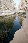 Waterfall reflection, Hiking in the Negev Desert