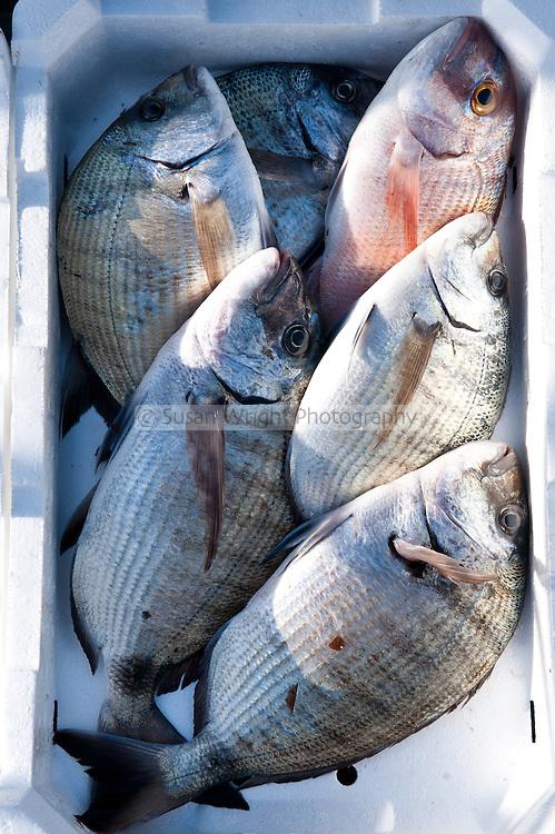 Fresh fish, in the Port of Ponza, Ponza island, Italy