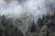 Baumgrenze im Nebel, Innergschlößtal, Nationalpark Hohe Tauern, Osttirol in Österreich