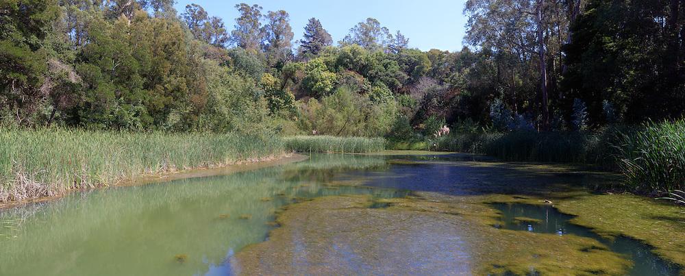 Marsh. (64986 x 26170 pixels)