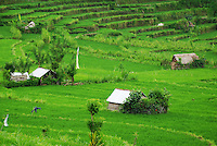 The lush east Bali landscape with paddy fields and huts.