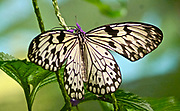 Butterfly Gardens, Victoria, Canada