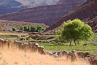 VALLES CALCHAQUIES, CULTIVOS EN EL SALADILLO, RUTA 40 EN LOS ALREDEDORES DE LA POMA, PROV. DE SALTA, ARGENTINA