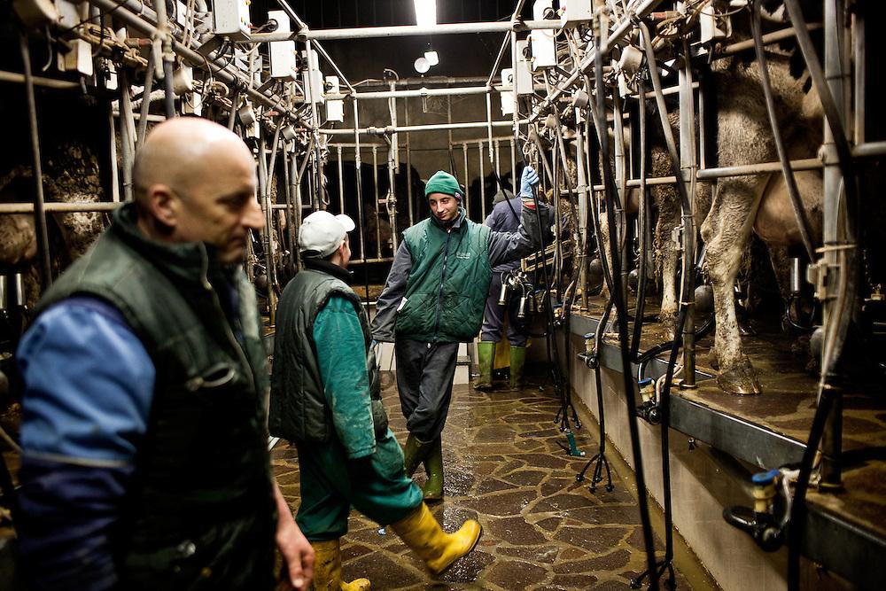 Azienda agricola Fratelli Boldini, a poco meno di un chilometro dal Ticino. Le oltre cento vacche sono munte due volte ogni giorno, tutti i giorni, sabato e domenica compresi. Tra le 4-5 e 6-7 del mattino e tra le 16-17 e le 18-19. Il piccolo Erik, e suo cugino aiutano i propri genitori  nella mungitura.