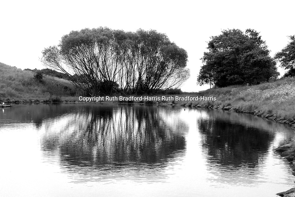 Reflections in Dunsapie Loch, Edinburgh, of a stand of native Ash trees (Fraxinus excelsior).<br />