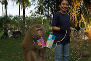 Monkey training centre,Surat Thani, Thailand