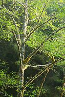 Minich Creek area near Garabaldi, Oregon.