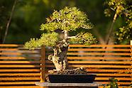 20120807 Limber Pine