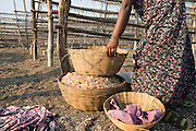 An Indian women prepares shrimp to dry in the sun.