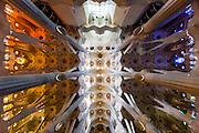 Ceiling of Sagrada Familia, Barcelona | Architect: Antoni Gaudí