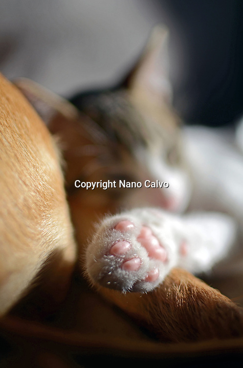 Cute kitten at home