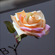On the 15th anniversary of 9-11 at Ground Zero, rose placed on the memorial plagues  by a loved ones by the name of a family member who died that day.<br /> <br /> The 2,983 names of the victims of the attacks of Sept. 11, 2001, and Feb. 26, 1993, World Trade Center truck bombing are inscribed into bronze parapets surrounding the twin memorial pools.