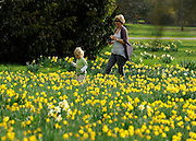 © Licensed to London News Pictures. 22/03/2012. Kew, UK. A young boy and a woman play in the daffodils. People enjoy the spring sunshine in The Royal Botanic Gardens at Kew today, 22 March 2012. Temperatures are set to reach 18 degrees celsius in some parts of the UK today. Photo credit : Stephen SImpson/LNP