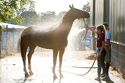 © Licensed to London News Pictures. 24/07/2018. Llanelwedd, Powys, UK. A horse gets a washdown in the stable area on the second day of the Royal Welsh Agricultural Show. The Royal Welsh Agricultural Show is hailed as the largest & most prestigious event of its kind in Europe. In excess of 200,000 visitors are expected this week over the four day show period. The first ever show was at Aberystwyth in 1904 and attracted 442 livestock entries. Photo credit: Graham M. Lawrence/LNP