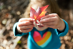 Young Girl Holding Autumn Leaf, Close-up view