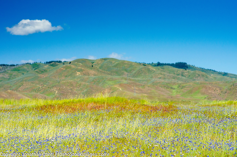 The Boise foothills in the spring