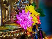05 JUNE 2015 - KUALA LUMPUR, MALAYSIA:  Flowers left as an offering in the main prayer hall at Sri Mahamariamman Temple, the oldest functioning and most important Hindu temple in Malaysia. The principal deity in the temple is Mariamman,  a deity that is popularly worshipped by overseas Indians, especially Tamils, because she is looked upon as their protector during the sojourn to foreign lands. Mariamman is a manifestation of the goddess Parvati, an incarnation embodying Mother Earth with all her terrifying force. She is associated with disease and fever and protects her devotees from unholy or demonic events.    PHOTO BY JACK KURTZ